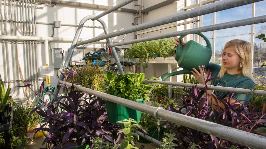 Lilia Theisen, UW-Stout Environmental Science student and Greenhouse Manager, waters plants in the Plant Biology Greenhouse inside the Jarvis Hall Science Wing on Tuesday, December 19, 2017.